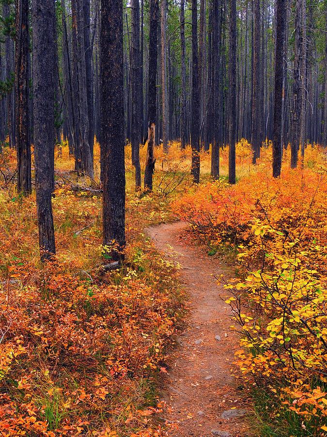 Yellowstone Photograph - Autumn In Yellowstone by Raymond Salani III