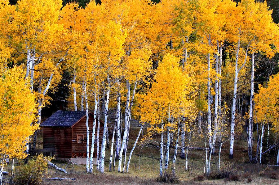 Scenic Photograph - Autumn Inn by Darryl Wilkinson