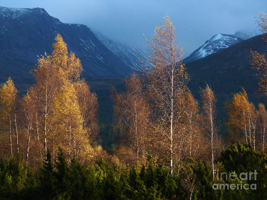 Autumn Photograph - Autumn Into Winter - Cairngorm Mountains by Phil Banks