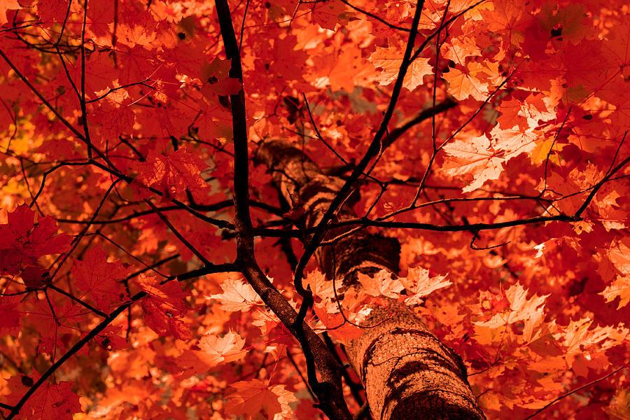 Autumn Photograph - Autumn by Illusorium Illustration