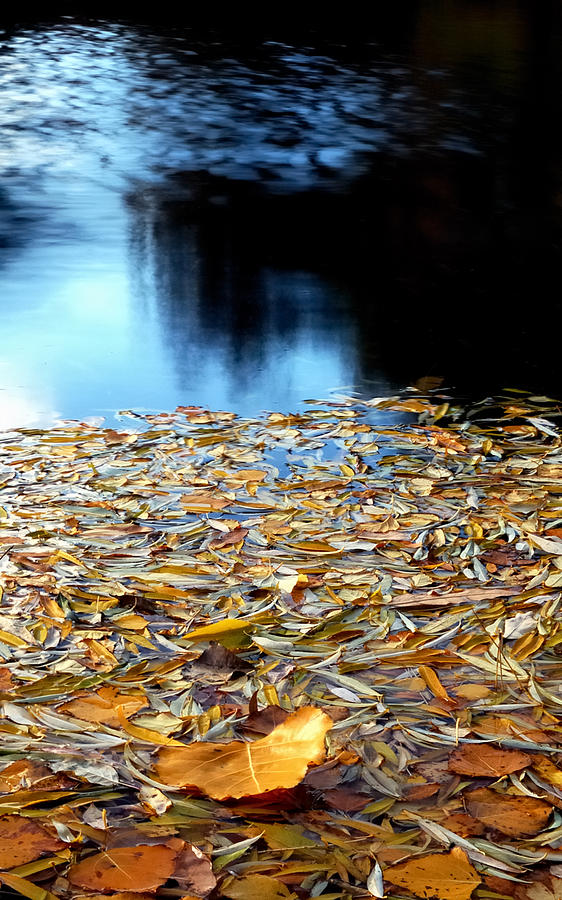 Waters Photograph - Autumn Lake by Steven Milner