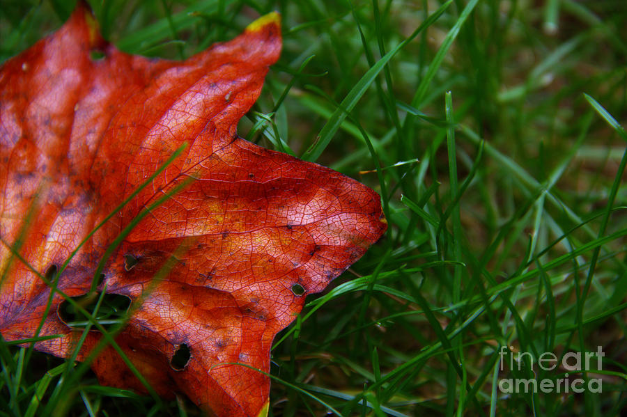 Landscape Photograph - Autumn Leaf by Melissa Petrey