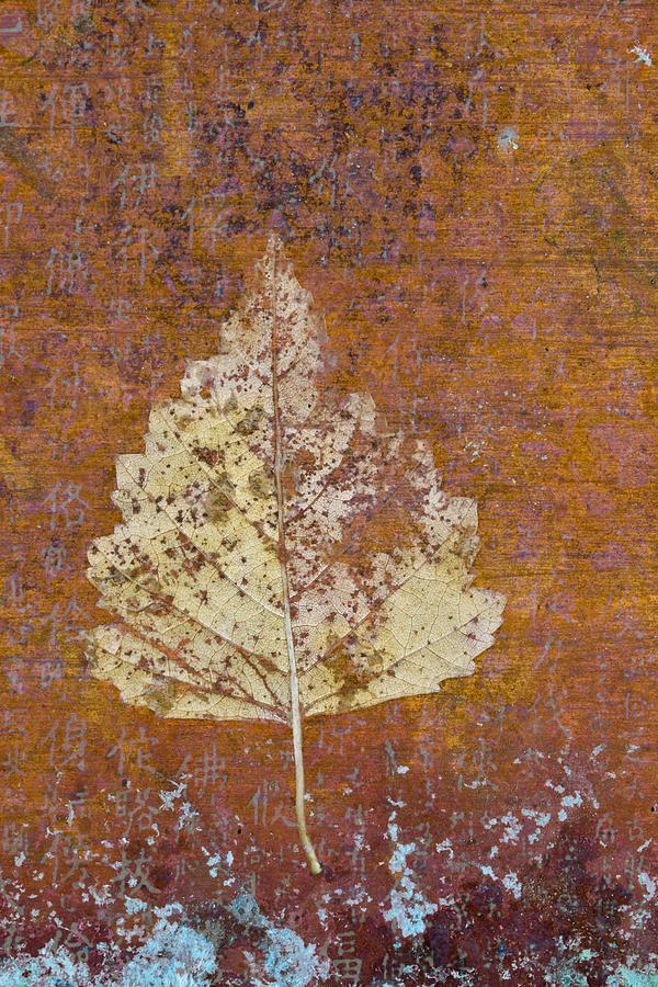 Leaf Photograph - Autumn Leaf on Copper by Carol Leigh