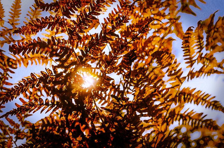 Autumn Leafs Photograph