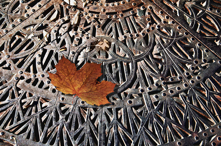 Nature Photograph - Autumn Leave On Iron Grate by Larry Butterworth
