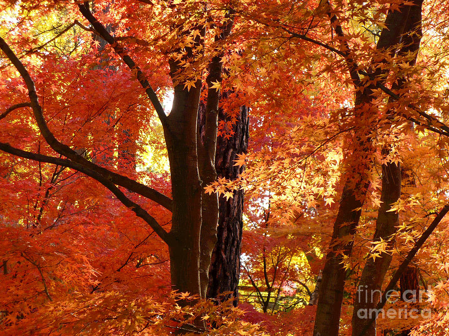 Autumn Leaves Photograph - Autumn Leaves by Carol Groenen