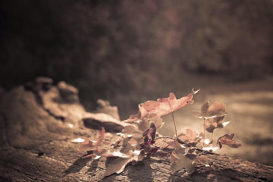 Autumn Photograph - Autumn Leaves by Amanda Elwell