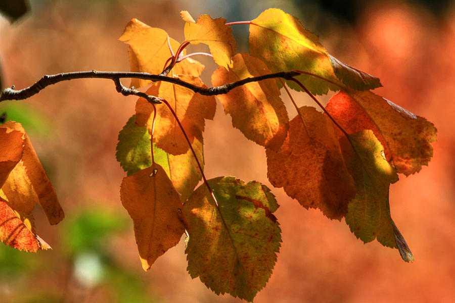 Autumn Leaves Photograph - Autumn Leaves by Donna Kennedy