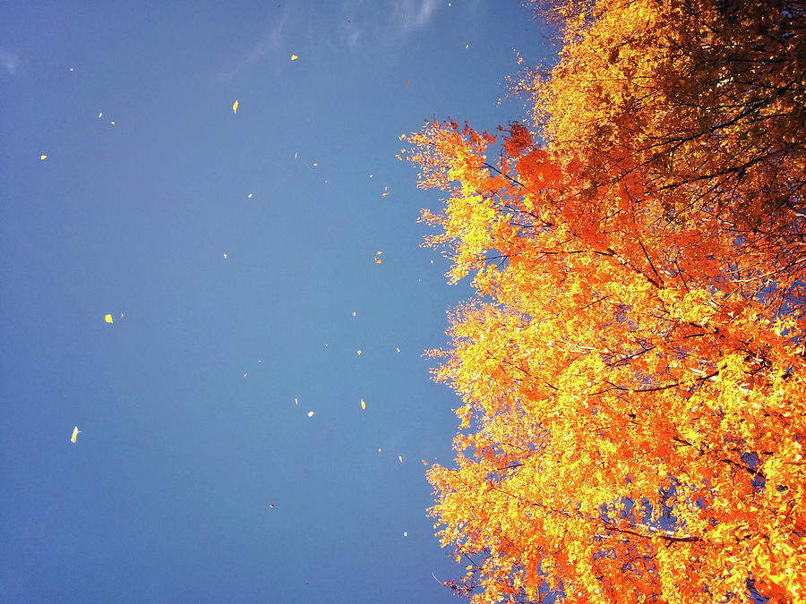 Autumn Leaves Flying In The Wind Photograph by Sami Hurmerinta