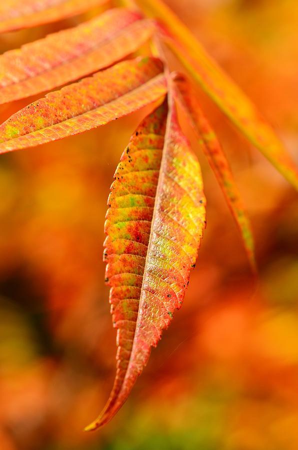 Autumn Photograph - Autumn Leaves by Gynt