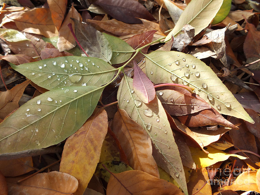 Leaves Photograph - Autumn Leaves by  Marcus Maiden
