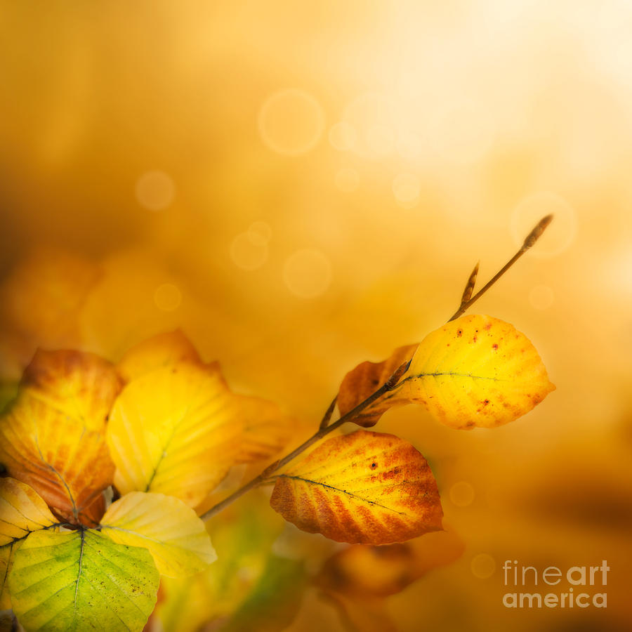 Abstract Photograph - Autumn Leaves by Mythja  Photography