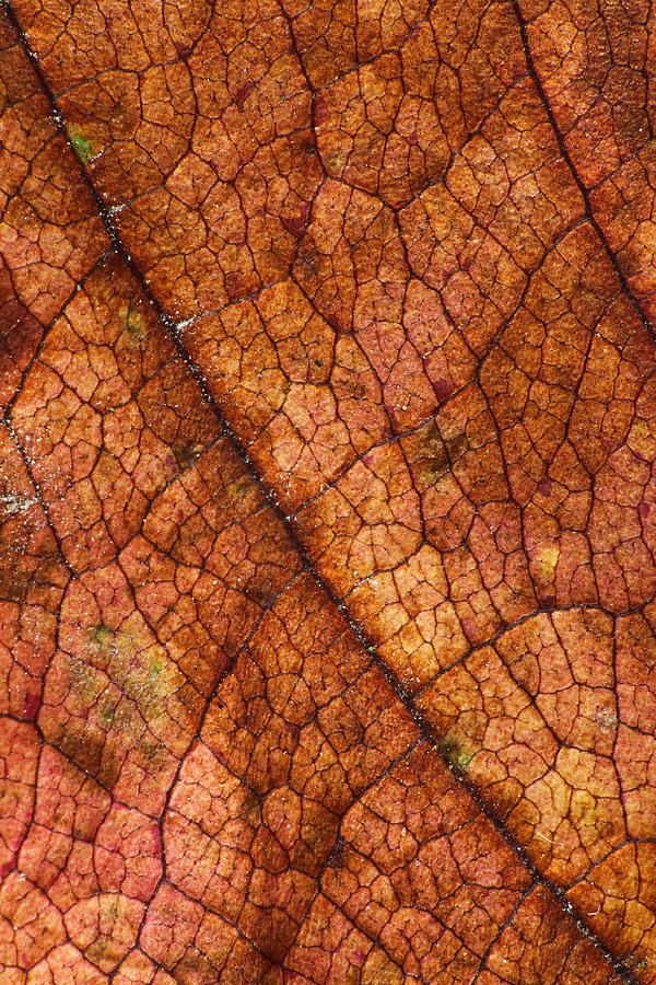 Autumn Photograph - Autumn Leaves No.7 by Daniel Csoka