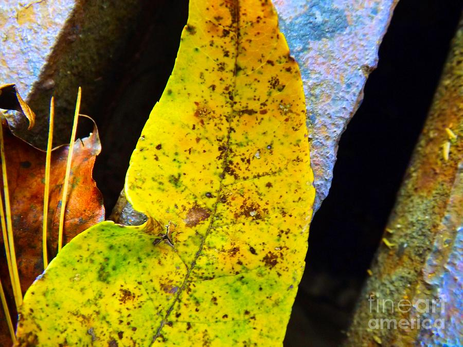 Autumn Photograph - Autumn Leaves by Robyn King