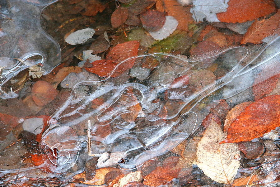 Autumn Leaves Photograph - Autumn Leaves Under Ice by Carolyn Reinhart