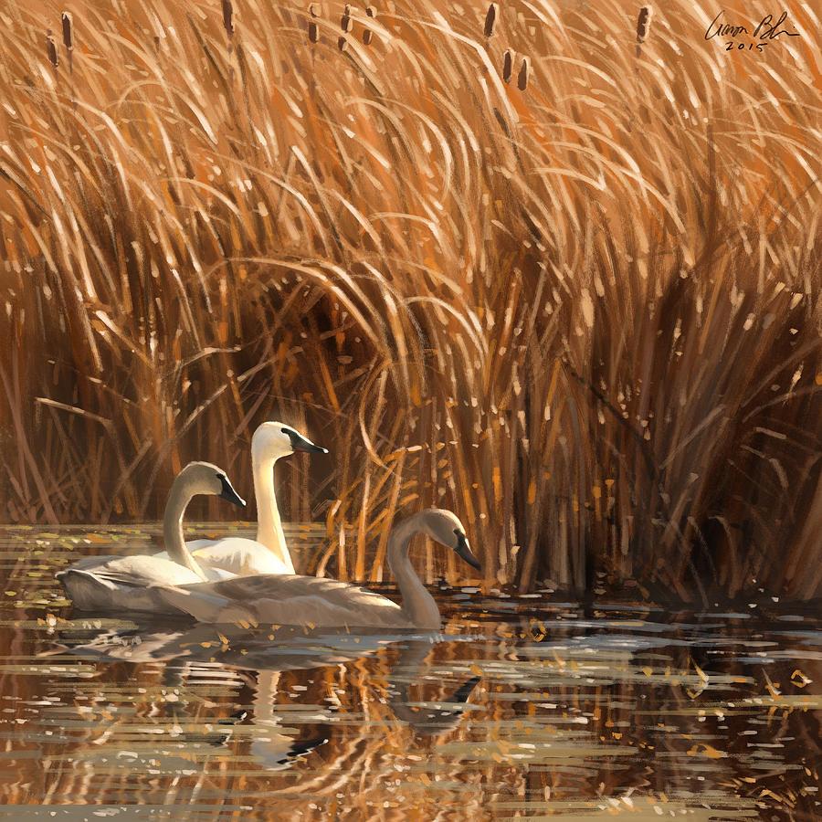 Swans Digital Art - Autumn Light- Trumpeter Swans by Aaron Blaise