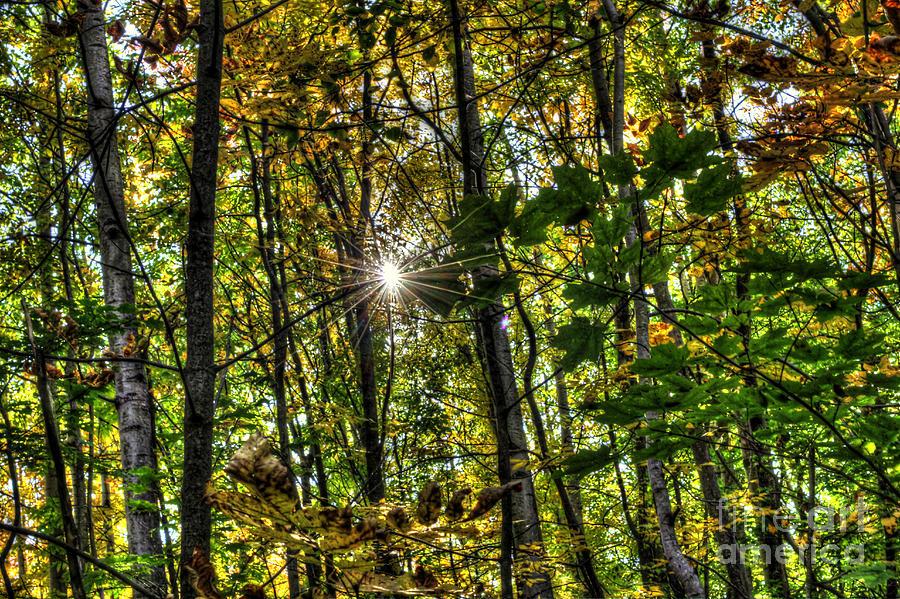 Fall Photograph - Autumn Lights  by Rich Fletcher