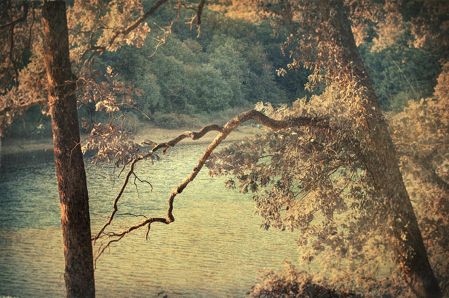 Woods Photograph - Autumn Manifesto by Taylan Apukovska