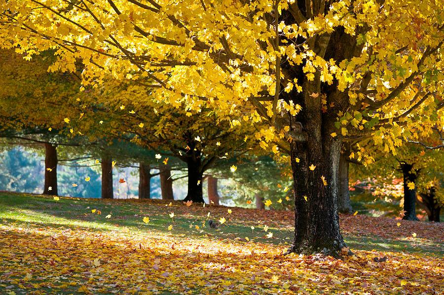 Autumn Photograph - Autumn Maple Tree Fall Foliage - Wonderland by Dave Allen