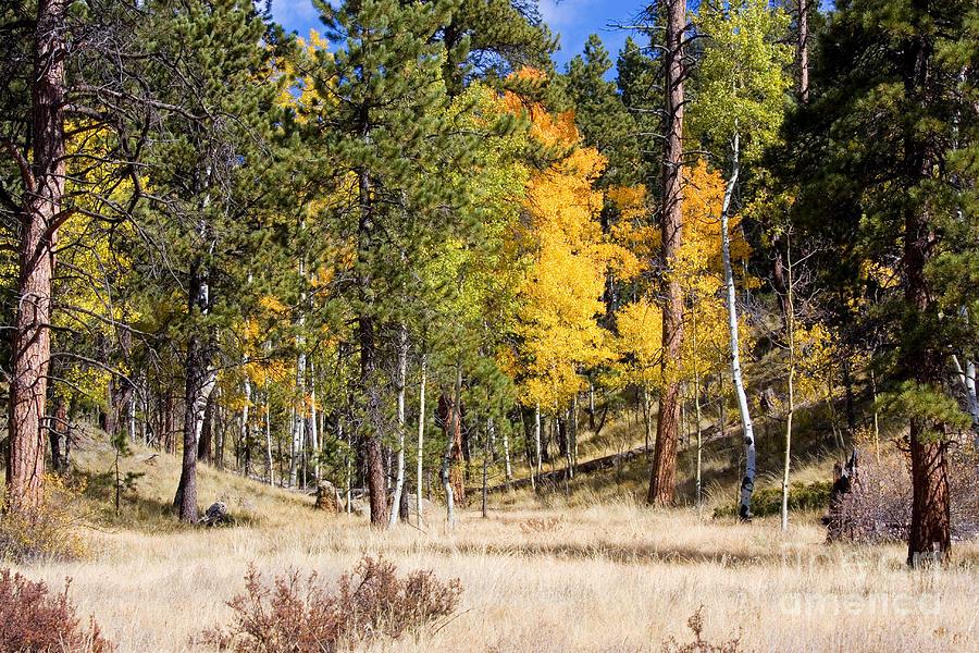 Autumn Meadow Photograph