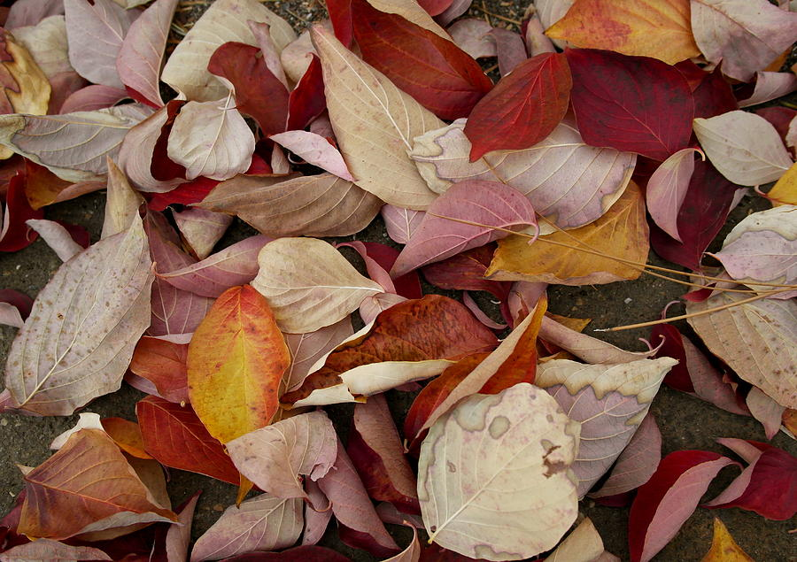 Autumn Medley by Michele Myers
