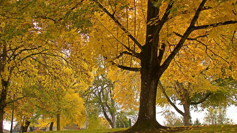 Autumn Landscape Photograph - Autumn Memories by Beverly Guilliams