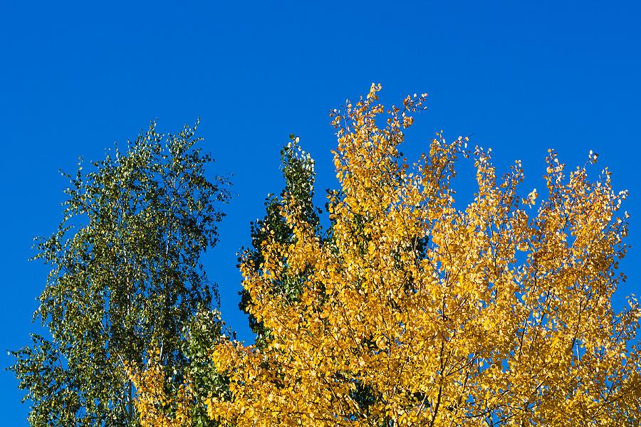 Abstract Photograph - Autumn Mix 2 - Featured 3 by Alexander Senin