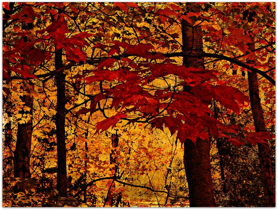 Autumn Mosiac  Photograph by Dianne  Lacourciere