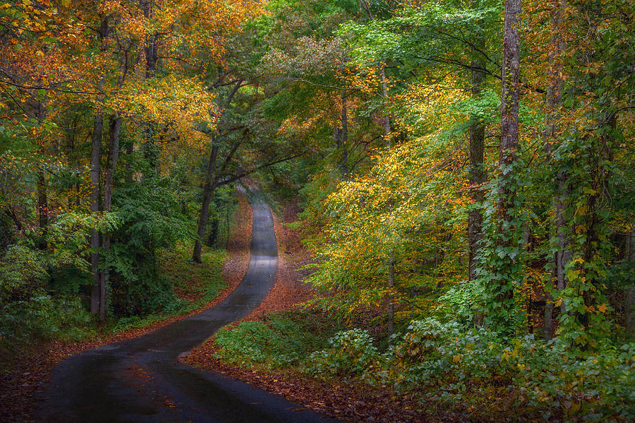 Tree Photograph - Autumn Mountain Road by William Schmid