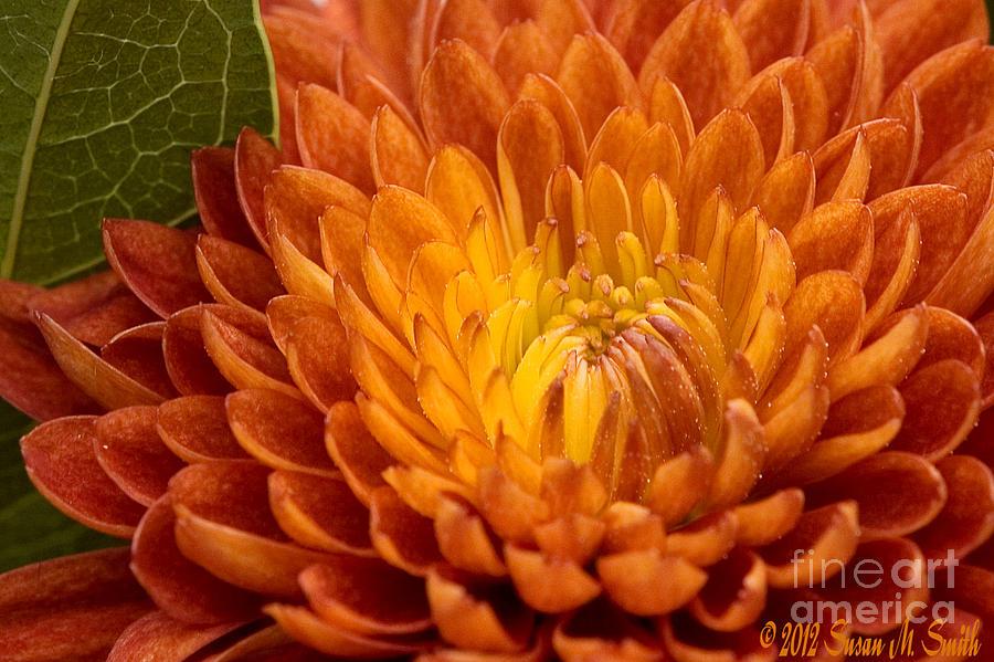 Autumn Mum by Susan Smith
