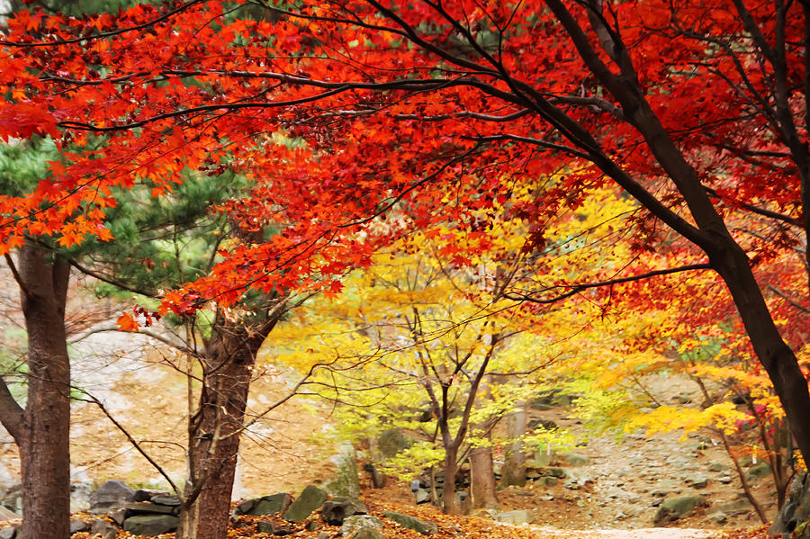 Landscape Photograph - Autumn of Chungnyeongsan by Phoresto Kim