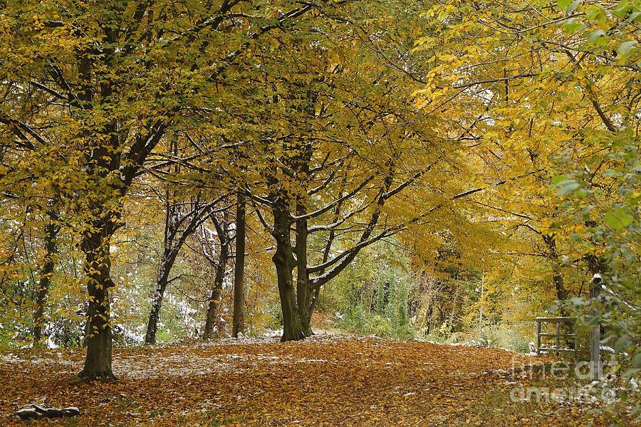 Landscape Photograph - autumn on Moenchsberg in Salzburg by Rudi Prott