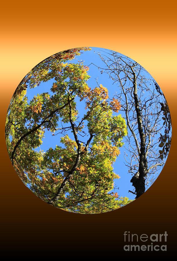 Autumn Photograph - Autumn Opens Up by Rick Rauzi