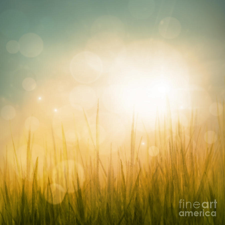 autumn or summer abstract season nature background