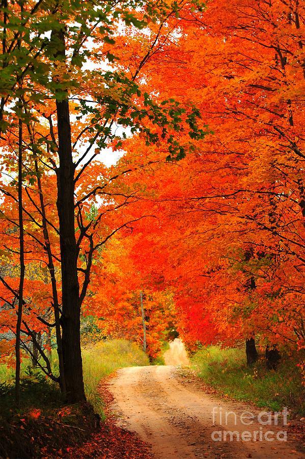 Autumn Photograph - Autumn Orange 2 by Terri Gostola