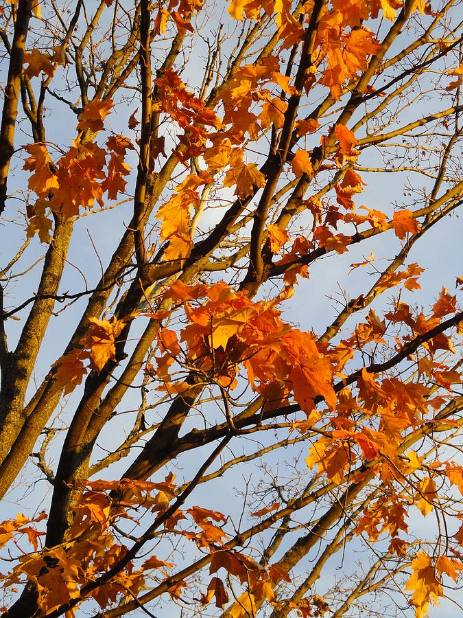 Leaves Photograph - Autumn Orange by Guy Ricketts