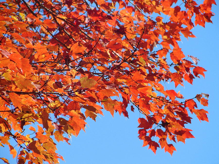 Autumn Photograph - Autumn Orange by Lew Davis
