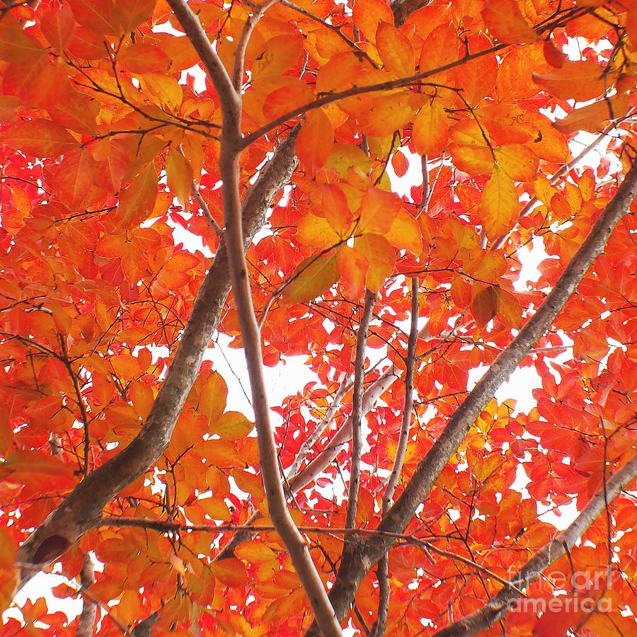 Autumn Leaves Photograph - Autumn Orange by Scott Cameron