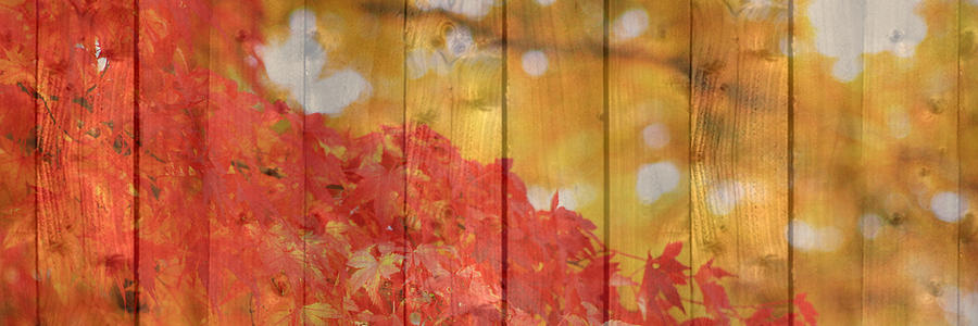 Autumn Photograph - Autumn Outdoors 1 Of 2 by Beverly Claire Kaiya