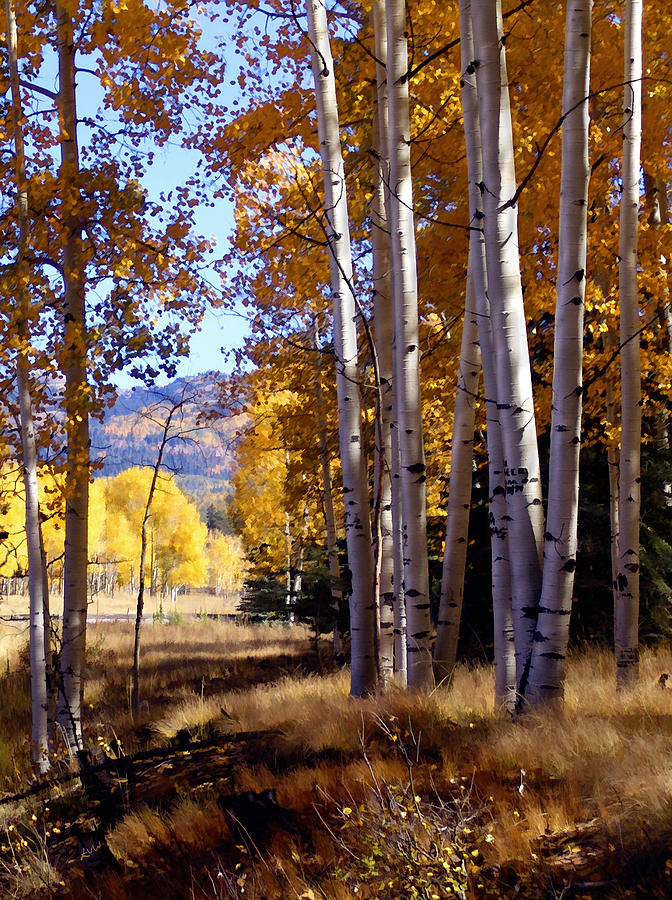 Trees Photograph - Autumn Paint Chama New Mexico by Kurt Van Wagner