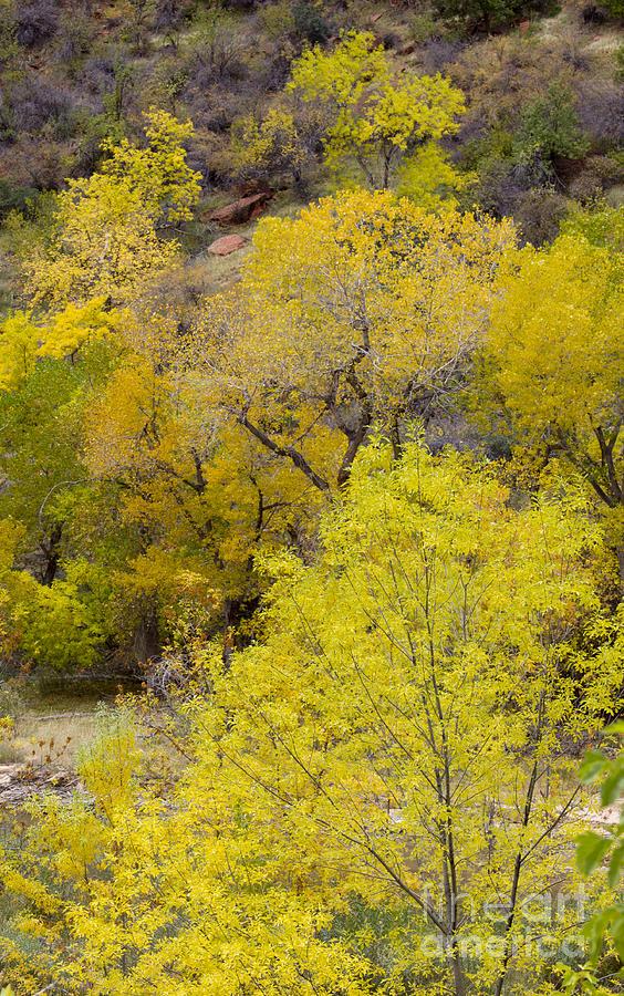 Zion Photograph - Autumn Palatte by John Blumenkamp