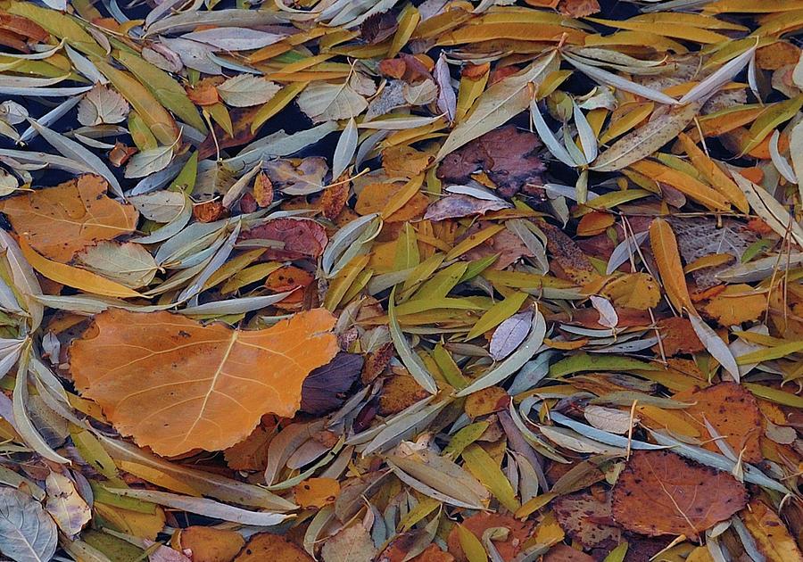 Autumn Photograph - Autumn Palette by Steven Milner