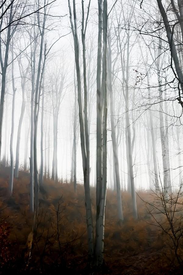 Forest Photograph - Autumn Pastel by Ioana Todor
