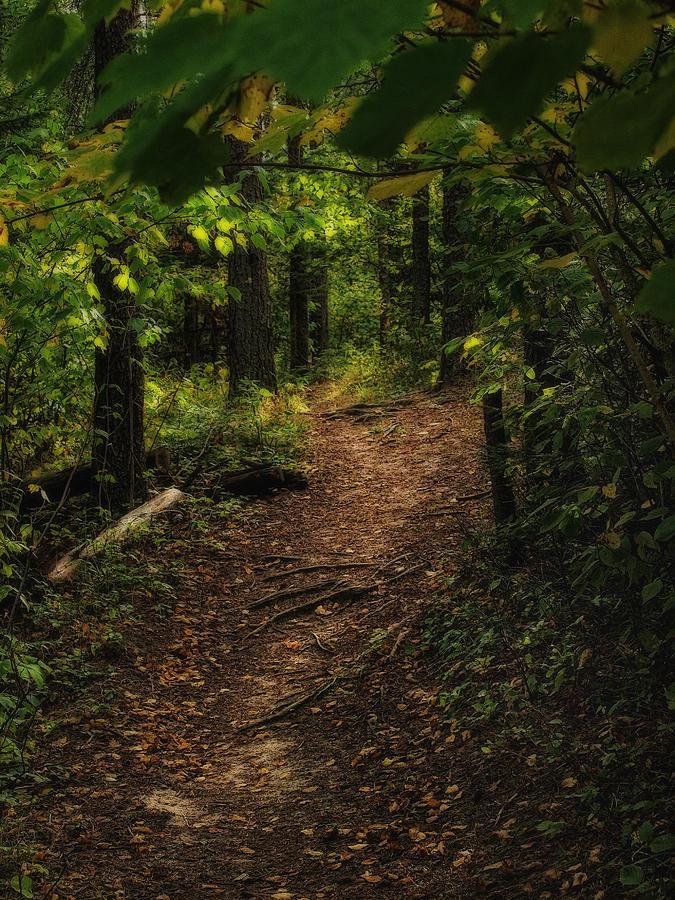 Autumn path by Stan Wojtaszek