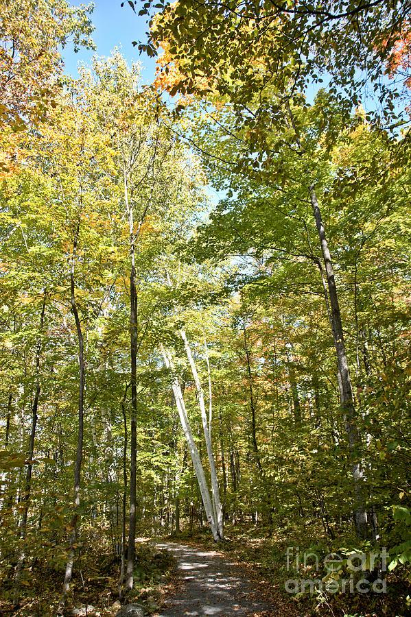Autumn Pathway Photograph by Cheryl Baxter
