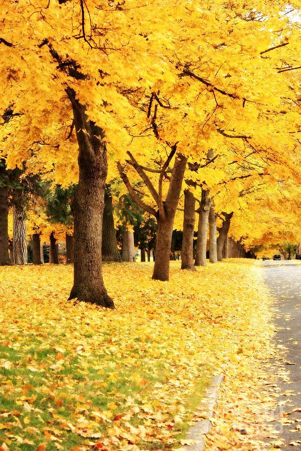 Carol Groenen Photograph - Autumn Perspective by Carol Groenen