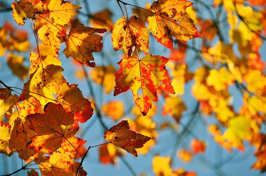 Autumn Photograph - Autumn Petals by JAMART Photography