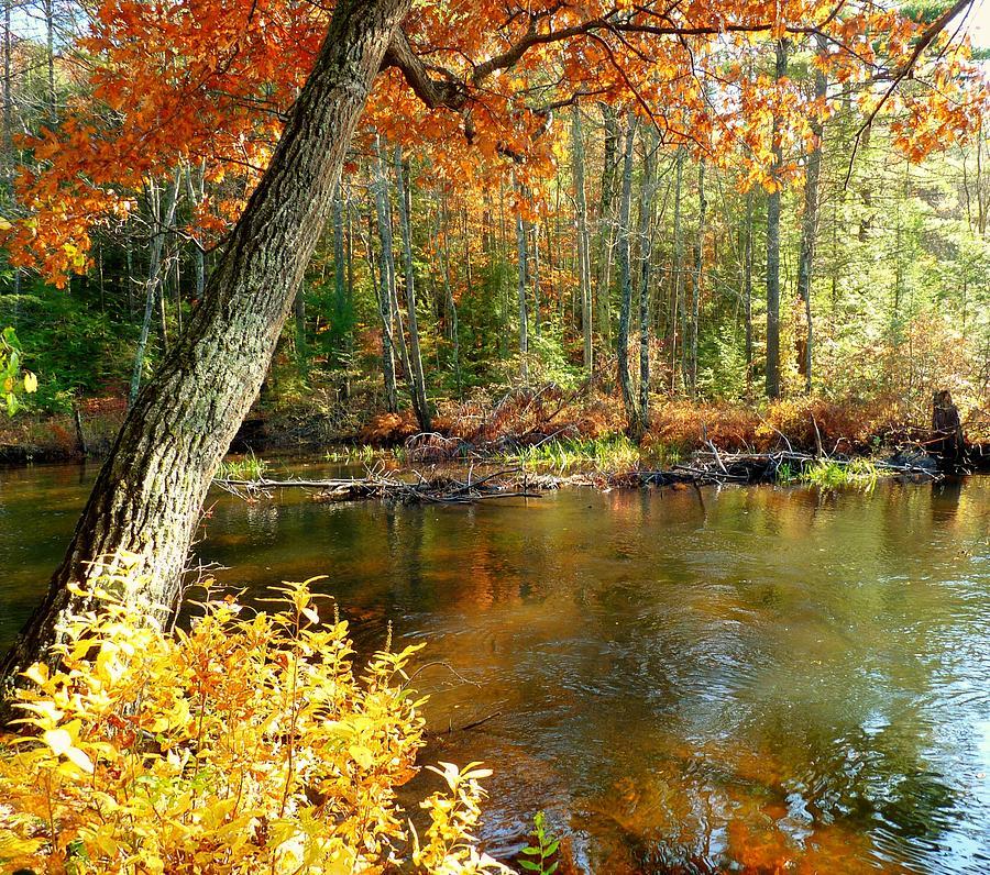 Autumn Landscape Photograph - Autumn Pond by Elaine Franklin