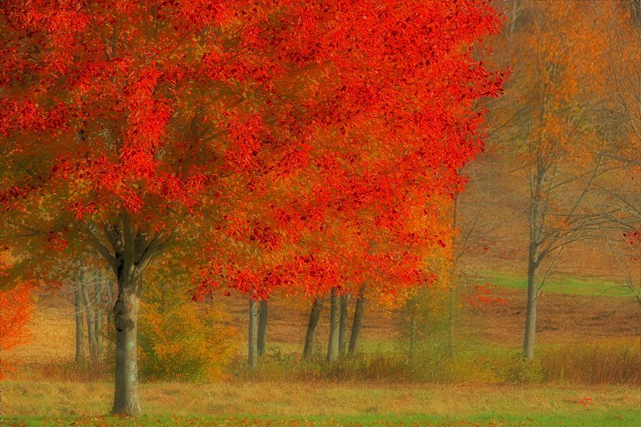 Autumn Photograph - Autumn Popping by Karol Livote