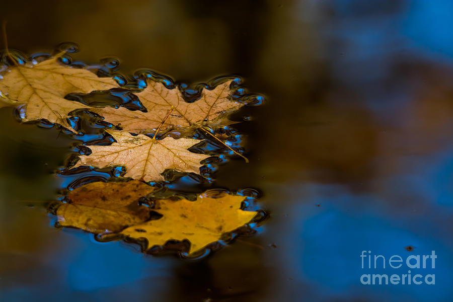 Autumn Puddle Photograph by Cheryl Baxter